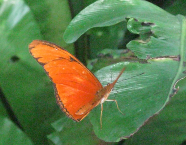 Niagara Butterfly Conservatory