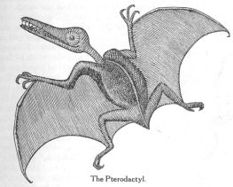 Historic drawing of a Pterodactyl, courtesy of http://www.creationism.org/books/price/PredicmtEvol/Predicmt07.htm