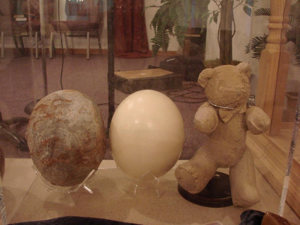 Fossil Hadrosaur egg, modern ostrich egg, and fossilized teddy bear